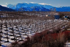 No Dryden Rd View (Pictoscribe) Tags: pictoscribe dryden orchard winter wenatchee valley february