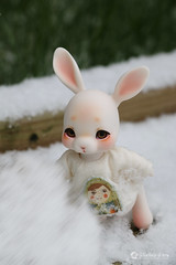 2018jinju-family04 (Nathy1317) Tags: ウサギ 兎 雪 冬 lapin neige hiver extérieur cocoriang peppi tobi animal