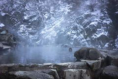 Hot spring... (Syahrel Azha Hashim) Tags: hotwaterspring sonya7m2 moment touristattraction monkey winter sonyimages nature coldweather stream sony colorimage ilce7m2 destination japanesemacaque animal simple onsen snowmonkey 2017 details beautiful primate nopeople hotspring outdoors colors environment travel macaque japan nagano