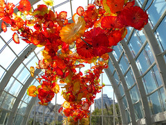 Glass poppies floating through the air. (vickilw) Tags: washington seattle glass chihuly poppy glasshouse flower 7daysofshooting week27 banginthemiddle colourfulthursday 6ws