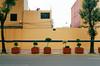 73330022 (alexdotbarber) Tags: 1125 35mm cdmx df kodakportra400 mexico mexicocity nikonfm3a slr voigtländerultron40mmf2slii analog colornegative f8 manualfocus topiary