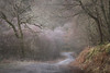 Leads (jellyfire) Tags: distagont3518 forest frost landscape landscapephotography moss road sonnartfe55mmf18za sony sonya7r sonyfe70200mmf40goss winter woodland ze zeissdistagont18mmf35ze capelcurig leeacaster lichen path sbend snowdonia trees wales woods wwwleeacastercom zeiss