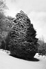 (Devin Walker) Tags: tamron nikon d200 bw tree snow 02b