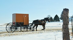 Hurry Home. Volant, PA (bobchesarek) Tags: horse buggy cold winter harness amish padutch volant pennsylvania