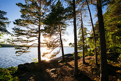 Guppviksön I (Robert Anders) Tags: 2017 ccby canoneos6d creativecommons eos6d lake scandinavia schweden see skandinavien sonne sun sweden trees wasser water zeissdistagont3518ze värmlandslän swe