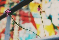 Just another test shot from my Petri TTL with fujifilm superia 400 35mm film (DaniellaSevern) Tags: 35mm film colourfilm filmcamera filmphotography fujifilm fujifilmsuperia lifestylephotography streetphotography petri petrittl graffiti graffitiwall flowers raindrops notts nottingham nottinghamshire depthoffield bokeh