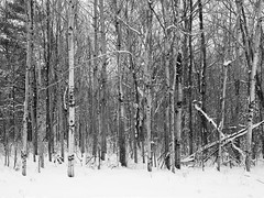(Adam C Images) Tags: fuji xt2 mirrorless xtrans iii fujinon 1655 f28 r lm wr weather resistant sealed winter snow ice colour black white verona ontario canada south frontenac township trees street selfie self portrait rural community crop sensor