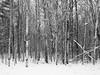 (Adam C Images) Tags: fuji xt2 mirrorless xtrans iii fujinon 1655 f28 r lm wr weather resistant sealed winter snow ice colour black white verona ontario canada south frontenac township trees street selfie self portrait rural community crop sensor