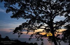 Murmuring dusk...... (Ashk81) Tags: dusk dusklight amazingdusk amazingsunset cloudscape clouds amazingthailand silhouette beautifulevenings tree teamcanon theworldiexpore exploretheworld travel asia light love lovetraveling traveler traveladdict