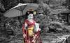 Mameryu - Maiko in Kyoto Tryptych 2 of 3.jpg (JUNEAU BISCUITS) Tags: mameryu geisha kyoto gion portrait portraiture japan japanese nikon nikond810 hawaiiphotographer garden temple umbrella kimono