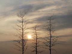 Sunset in my City (BrigitteE1) Tags: sunset sonnenuntergang bremen deutschland germany winter baum tree sky himmel