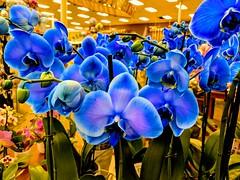 Fantastic color! (CopperScaleDragon) Tags: orchids blue purple kroger pixel2 flowers
