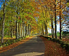 Autumn Road (eric robb niven) Tags: ericrobbniven scotland dunkeld snaigow trees cycling perthshire dundee landscape