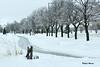 Le chemin glacé de l'hiver! / Winter's icy roads (Pentax_clic) Tags: imgp5506 pentax kx chemin arbre verglas hiver janvier 2018 robert warren vaudreuil quebec