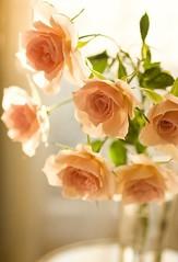 ما هو الأهم ... أن تكون جميلاً...أم ...أن تعلم أنك #جميل....أم... أن تُخبر الآخرين بجمالك ...؟؟!!! لنبدأ بالأقل أهمية: أن تُضطر لأن تلجأ لاخبار الآخرين بجمالك....هذا مؤشر فلس وفقر بمستوى #الجمال . أن تعلم بأنك جميل....هذا يُعزز ثقتك بمستوى جمالك ان كان لد (اللّهُمـَّ آرزُقنآ حُـسنَ ) Tags: النور الجمال جمال جميل