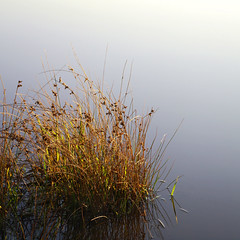 Reeds | Wistow (Daniel Tindale) Tags: reed reeds dam water reflection sky landscape evening rural pastoral farm farming farmland country countryside rustic australian native wistow bugle ranges bugleranges adelaide hills adelaidehills south australia southaustralia sa daniel tindale danieltindale thom sullivan thomsullivan poet poetry poem pentax k20d