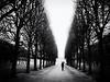 Jardin du Luxembourg (Feldore) Tags: paris jardin du luxembourg rain french avenue trees umbrella drizzle solitary figure walk walking feldore mchugh em1 olympus 1240mm