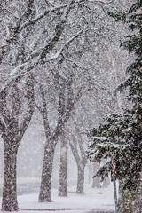 Blizzard (Koku85) Tags: winter snow canada blizzard weather