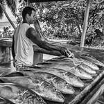 fresh fish thumbnail