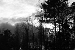 Black And White Landscape. (dccradio) Tags: lumberton nc northcarolina robesoncounty outdoors outside nature natural sky clouds tree trees winter january mondayafternoon afternoon monday cloud cloudformation bw blackandwhite blackwhite nikon d40 dslr