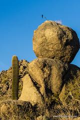 Bird on a branch on a boulder (doveoggi) Tags: 8272 arizona scottsdale mcdowellsonoranpreserve desert bird boulder saguaro