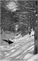 Winter Scenery near les Aravis (Savoie) ([JBR]) Tags: savoie france alpes alps francia lagiettaz lesaravis leplan leplanlagiettaz nature naturaleza natural luz light lumiere daylight lumieredujour tree trees trunc texture shadow sombra ombres patterns motifs neige snow winter hiver invierno cold froid frio branches branchages forest foret bosque jbrphoto jbrphotography pentax mono monochrome noir negro black white blanc blanco grey gris nieve mountain montagne montana treetrunctexture 2017 janvier january enero soulfulnature k5ii landscape
