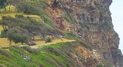 Winds of change (enjbe) Tags: australia copacabana cliff rock tree windswept