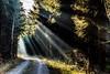 The Light of the Spirit (**capture the essential**) Tags: winter sonnenstrahlen light licht leitzsummiluxm1475 2016 leicalenses sonyilce7m2 sonya7mark2 sonya7mii rayoflight sonya7ii lightbeam lichtstrahlen leicasummiluxm1475 forest sonya7m2 wald