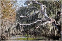 The marsh (photosbylag) Tags: circleb alligators cardinal greenheron hogs piglets