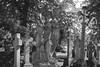 Brompton Cemetery (Lobe occipital) Tags: london londres cemetery londoncemetery victoriancemetery victorian chelsea 50mm brompton bromptoncemetery blackandwhite statues angels graves death cross trees 2016 bokeh belgianphotographer