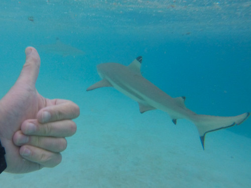 Snorkeling with sharks!