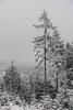 Just winter (pasiak75) Tags: 2018 drzewa ice lod snieg snow trees winter zima