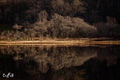 Reflections (Loch Awe, Scotland) (Renate van den Boom) Tags: 02febuari 2018 boom europa glencoe grootbrittannië jaar landschap lowkey maand meer natuur renatevandenboom schotland seizoenen stijltechniek winter