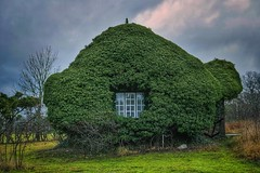 Ivy house (Alizarin Krimson) Tags: ivy house cabin cottage forge greenery window gotland katthammarsvik katthamra green architecture