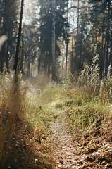 000116400017 (MatveyKarmakov) Tags: nikon nikonf3 kodak 35mmfilm morning film analog filmisnotdead filmphotography filmphoto filmcamera filmlandscape filmcommunity onfilm ishootfilm wood forest folk livefolk