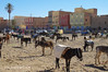 K3AR0147 (aerre64) Tags: aerre64 pentax k3 k20d marocco maroc deserto colori su msabbia atlante