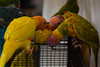 colourful birds (georgerebello1) Tags: travel explore market trade photography canon 6d lseries art adventure