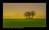 Die Insel / the island (H. Roebke) Tags: holsteinischeschweiz de landscape sunset nature sonnenuntergang germany canon1785mm natur canon7dmki solitär baum farbe 2009 landschaft color tree