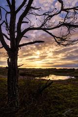 Just a tree at the beach. (J. Pelz) Tags: tree sky gotland nature ocean sunset landscape clouds gotlandslän sweden se