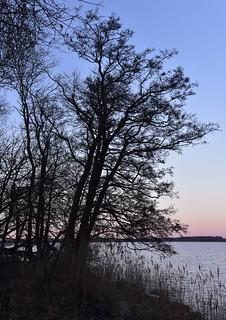 An der Schlei mit dem Sonnenuntergang im Rücken; Borgwedel (27)