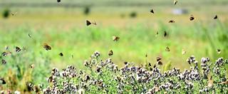 Butterfly bonanza.