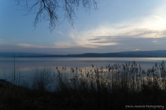 Simply natural (Yarin Asanth) Tags: nature simple silhouettes silence water calm romantic light surface lake atmosphere morning lakeconstance gerdkozikphotography yarinasanthphotography