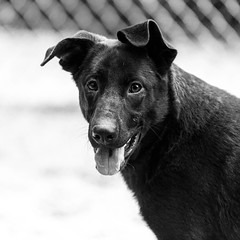 Janerio27Jan201879-Edit.jpg (fredstrobel) Tags: dogs pawsatanta phototype atlanta blackandwhite usa animals ga pets places pawsdogs decatur georgia unitedstates us