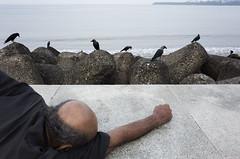 (Md. Imam Hasan) Tags: street streetphotographer streetphotography muhammadimamhasan mumbai bangladesh candid decisivemoment people photography photographer animal crow