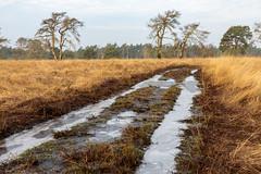 _Z1A3325 (doevos) Tags: gelderland hogeveluwe npdhv nationaalparkdehogeveluwe veluwe wandelfit