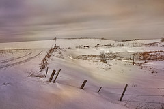 Pasture Land in Winter (Dave Linscheid) Tags: landscape textured winter snow fence machinery disk cold watonwancounty mn minnesota usa farm rural country agriculture topaztextureeffects2