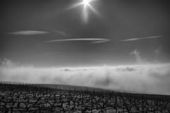 Heaven vineyard's (ZeGaby) Tags: blackandwhite champagne clouds landscapes naturephotography paysages pentax35mm pentaxk1 vignes vignobles vineyards ay grandest france fr