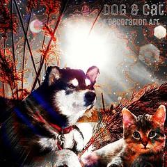 Sunset Dog & Cat  Decoration Art  美しい夕暮れの河川の背景に、ネコちゃんとワンちゃんを、編集加工した作品です。 (nodasanta) Tags: instagramapp square squareformat iphoneography uploaded:by=instagram lofi