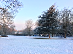 Manor Park in the snow (Chimera Dave) Tags: deciduous leafless silhouette conifer winter snow bench tree sutton manorpark