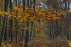 Herbst Wald (Dirk Buse) Tags: münster nordrheinwestfalen deutschland deu nrw germany wald outdoor natur nature forest farbe color colour olympus omd m43 mft stimmung
